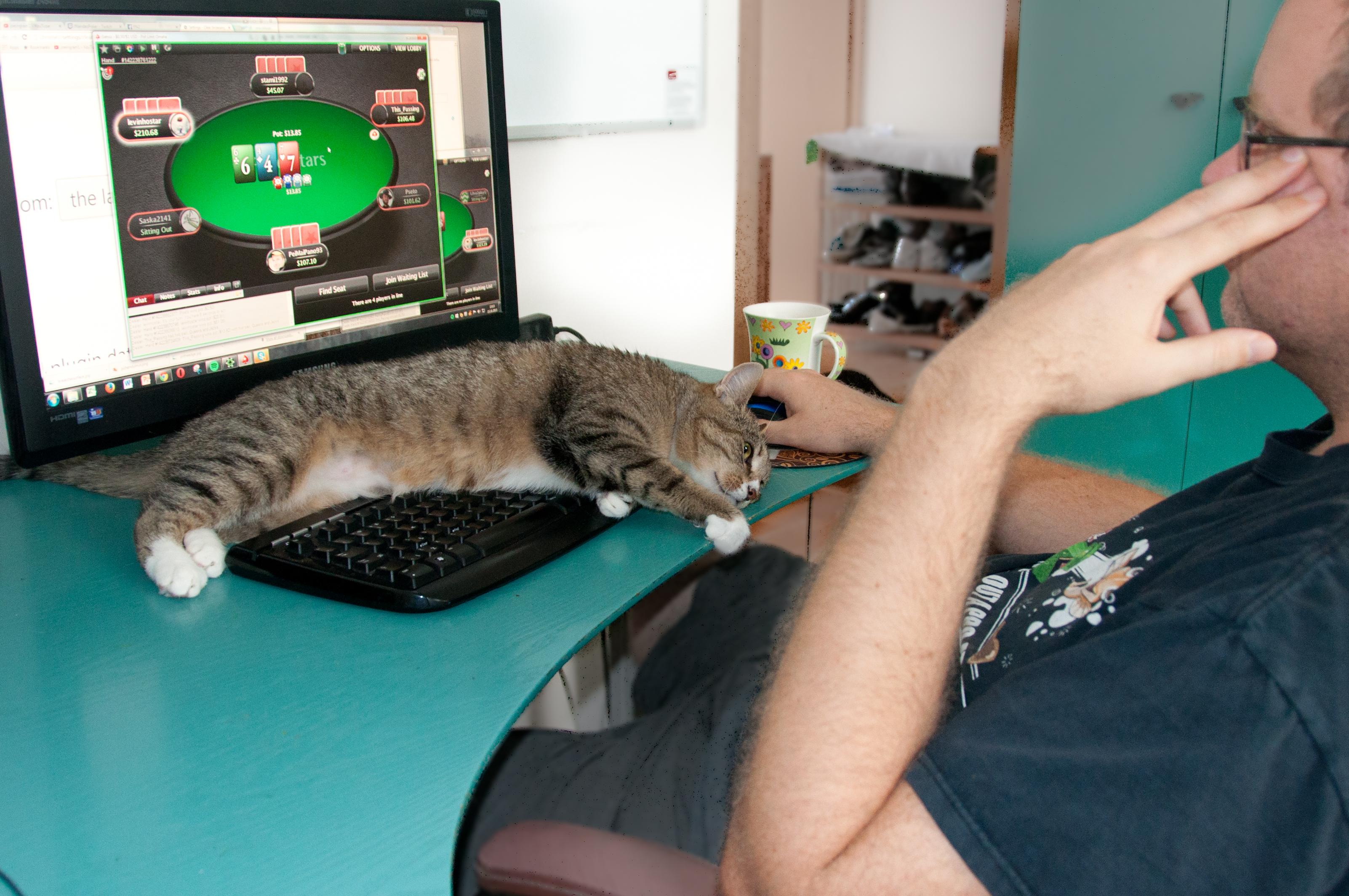 Kass klaviatuuril (1 of 1)
